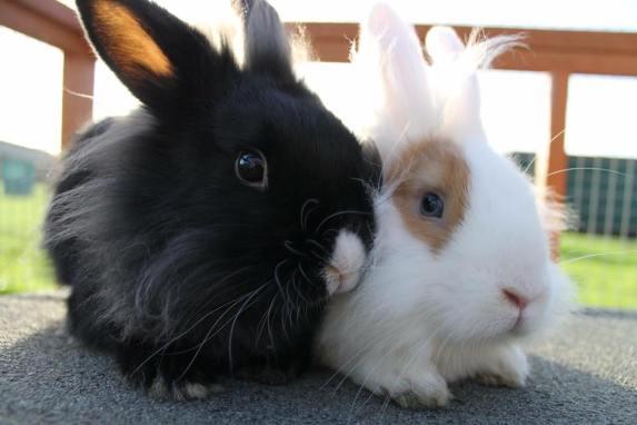 RSPCA Bunnies 2