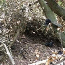 Leafy den